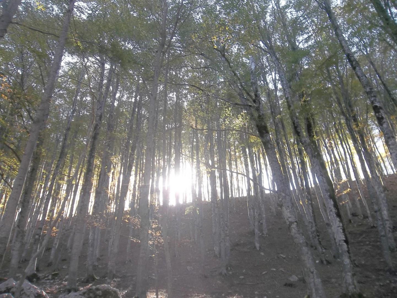boscoparconazionale1