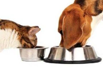 """Chieti: i cibi migliori per i nostri amici cani e gatti secondo Giorgio Santacroce di """"Acquari"""""""