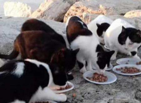 """A San Benedetto del T. (AP): venerdì 9 cena carnevalesca di beneficenza a tema """"gatto"""" con karaoke degli """"Amici dei mici sambenedettesi"""""""