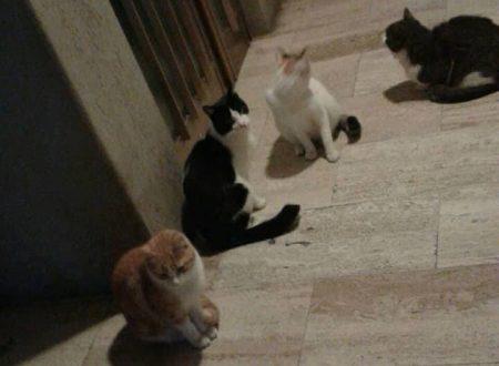 Corso Mazzini, moria di gatti a Vasto