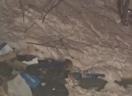 Passolanciano: volpi che cercano cibo nei rifiuti sulla neve