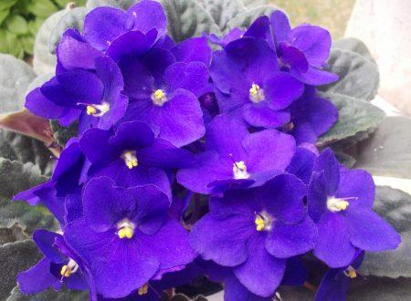 Natura e Benessere. Prendersi cura delle piante = Prendersi cura di sé  (di Paola Compagno  Psicologa psicoterapeuta)