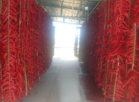 Il peperone dolce di Altino Oasi di Serranella prodotto della tradizione abruzzese