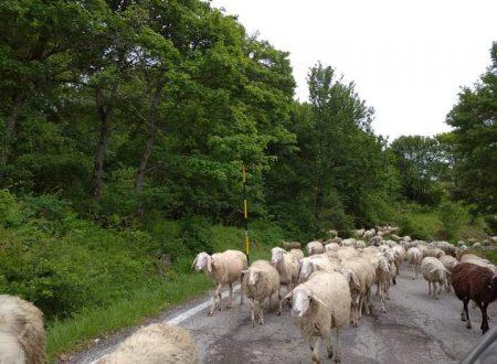 La transumanza in Abruzzo ieri, oggi e domani