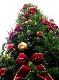 L'albero di Natale: un'usanza molto remota